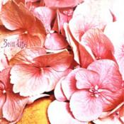 Still Life by STILL LIFE album cover