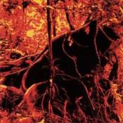 Bondage Fruit II by BONDAGE FRUIT album cover