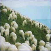Germinale by GERMINALE album cover