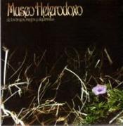 De los Brujos, Magos y Alquimistas by MUSEO HETERODOXO album cover