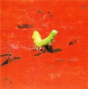 Inaudito by CALOMITO album cover