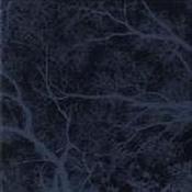 Sil Muir by SIL MUIR album cover