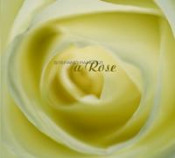 A Rose by PANUNZI, STEFANO album cover