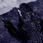 .avi by CONSECRATION album cover