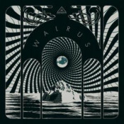 Walrus by WALRUS album cover